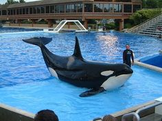 SeaWorld putting trainers back in with the whales after death of trainer