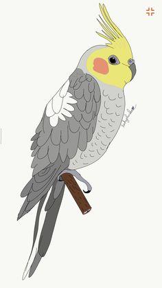 Cockatiel draw
