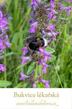 Bee, Plants, Animals, Honey Bees, Animales, Animaux, Bees, Animal, Plant