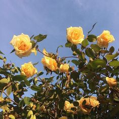 yellow, aesthetic, flowers, field, california, sky, vintage, hippy, 60s// follow me: brenna rose