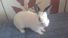 💜 #bunny #rabbit #tbt #followme #likeforlike #love #animals #animal #pet #dog #cat #dogs #cats #photooftheday #cute #pets #instagood #animales #cute #love #nature #animallovers #pets_of_instagram #petstagram #petsagram