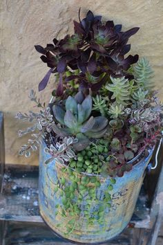Vintage bucket filled with colorful succulents.