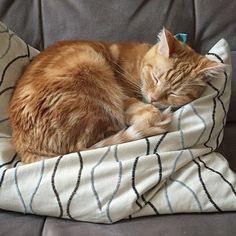 fin-for-the-win:  Do orange cats dream of electric lasagna?