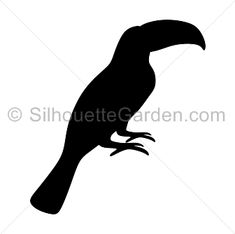 Toucan silhouette clip art. Download free versions of the image in EPS, JPG, PDF, PNG, and SVG formats at http://silhouettegarden.com/download/toucan-silhouette/
