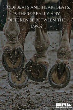 Hoofbeats and Heartbeats, one in the same to me! cute horse quote #BRLequine #hoofbeatstoyourheartbeat #loveyourhorse