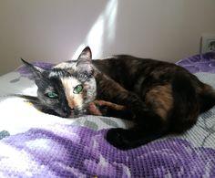 Bulduğu her güneş ışığı parçasından yararlanan kedim Venüs.