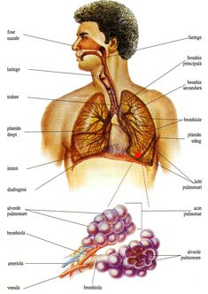 Natural Health Remedies, Sciatica, Acupressure, Human Anatomy, Natural Treatments, My Passion, Good To Know, Nursing, Study