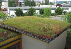 Die 158 Besten Bilder Von Dachbegrunung In 2019 Green Roofs