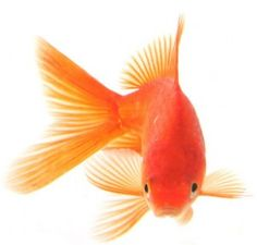 Bill and I had a goldfish named 'Cedric' he lived 1 year