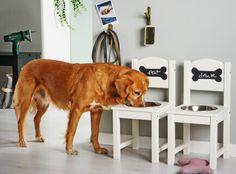 Самостоятельное изготовление места кормления для больших собак   Руководства «Сделай сам»   Bosch