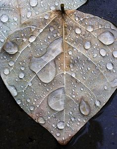 'Leaf in Rain' Photography by Alan Sailer http://www.flickr.com/photos/8763834@N02/4224398358/in/set-72157622985983435/lightbox/
