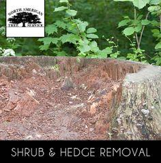 http://www.kudzu.com/m/North-American-Tree-Service-30470930