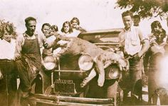 A mountain lion killed by an automobile in Pacific Palisades, 1928.