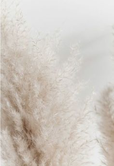 I love the soft, texture and natural hue Wallpaper Flower, Beige Wallpaper, Iphone Background Wallpaper, Iphone Backgrounds, Screen Wallpaper, Iphone Wallpapers, Food Wallpaper, Aesthetic Backgrounds, Aesthetic Iphone Wallpaper