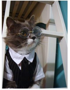 Is this cat an undercover reporter? Who does he spy on? Who reads the papers he writes? Who is he observing in this picture?