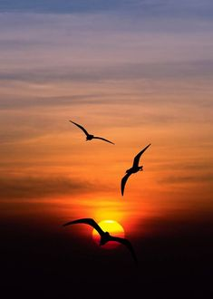 Sunset is the sunset in the afternoon. That time is beautiful scenery. We will present an article about sunset quotes love. Beautiful Nature Pictures, Beautiful Nature Wallpaper, Beautiful Sunset, Beautiful Birds, Beautiful Landscapes, Beautiful Scenery, Nature Photos, Sunrise Photography, Landscape Photography