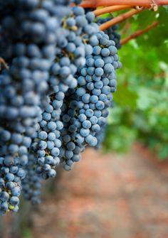 Sonoma, California ~ Wine Country