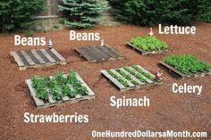 No Fuss Wood Pallet Gardening