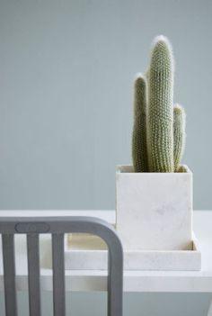 Kaktuser kan også være stilrent og elegant, her i marmorpotte.