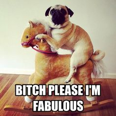 Bitch Please Dery Funny Pix, Hilarious, Crazy Cat Lady, Crazy Cats, Cool Pets, Cute Dogs, Pug Pictures, Pug Pics, Make A Girl Laugh
