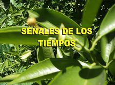 SEÑALES DE LOS TIEMPOS