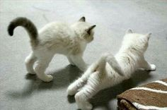 Simpaticissimi gatti