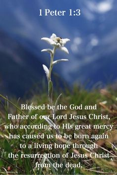 1 Peter 1:3 born again to an ever-living hope!!
