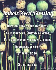Imbolc Seed Blessing – Witches Of The Craft® Imbolc Ritual, Beltane, Samhain, Wiccan, Magick, Fire Festival, Sabbats, Practical Magic, Kitchen Witch