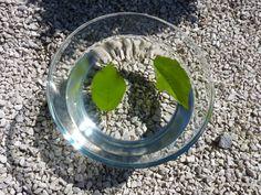 Ako listy dýchajú – pokus Plants, Plant, Planets