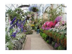 The Winter Gardens, Auckland Domain Winter Garden, Auckland, Sidewalk, Gardens, Flowers, Plants, Wedding, Valentines Day Weddings, Side Walkway