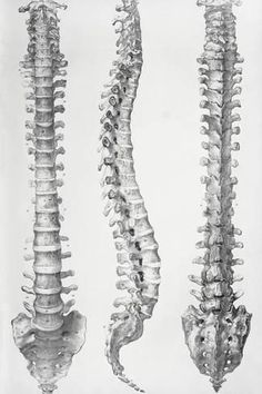Photographic Print: Spine Anatomy by Sheila Terry : 18x12in