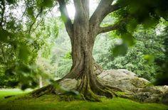 Casas E Jardins Exuberantes!por Depósito Santa Mariah