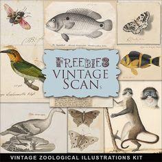 Freebies Vintage Zoological Ilustraciones