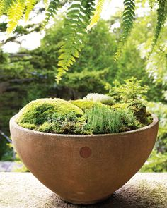 Woodland tableaux planted in beautifully made concrete bowls, birdbaths, and baskets are admired and remarked upon by visitors.