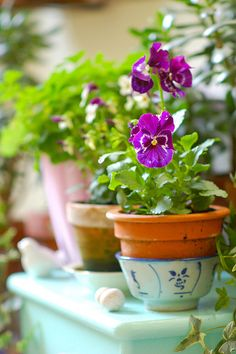 03-25-2016 magenta pansies in terra cotta pot sitting in a blue and white china bowl.