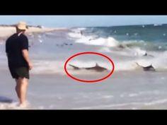 Haie soweit das Auge reicht - http://www.dravenstales.ch/haie-soweit-das-auge-reicht/