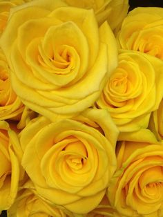 Fun yellow roses ! Who wouldn't love them!