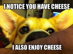 This is so Ollie. If we even open the drawer that has cheese in it he is at our feet. Silly pup. Daddy has him spoiled.