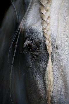 By Sandrine Philippe Branquart