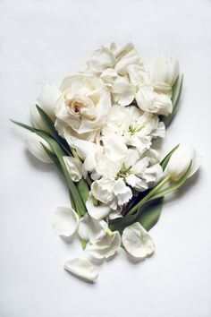 Lucy Snowe Photography | Modern Still Life of White Flowers Spring