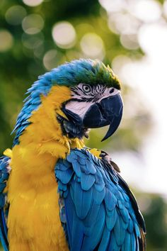 Macaw parrot in West Palm Beach, United States by Andrew Pons ( Parrot Wallpaper, Cute Wallpaper Backgrounds, Animal Wallpaper, Cute Wallpapers, Iphone Wallpapers, Hd Wallpaper, Wildlife Photography, Animal Photography, Photography Terms
