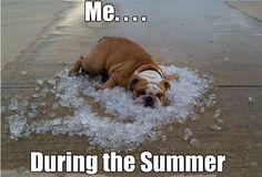 Texas summer heat meme The Funny, Funny Stuff, Awesome Stuff, Funny Things, Random Stuff, Animal Memes, Funny Animals, Animal Antics, The Beach