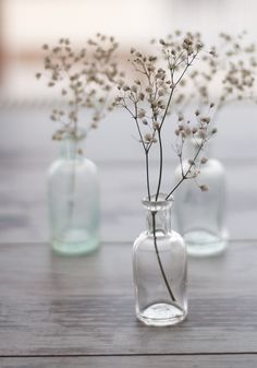 Décor de Provence - baby's breath in apothecary jars.
