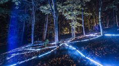 Beepart Festival. Digital Forest Installation