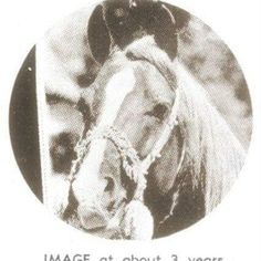 Image (*Mirage x *Rifala) AHR #1008; born April 29, 1933 Chestnut Stallion; Blood Typed Bred by Roger A. Selby, Portsmouth, Ohio.  Sire of 72 registered purebred Arabian foals.  100% Crabbet Sire of 74 registered offspring http://www.allbreedpedigree.com/image6