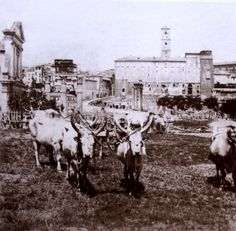 Campo Vaccino (Foro Romano) del 1862