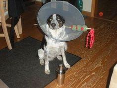dog martini costume.