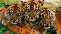 Resultado de imagem para animais fofos