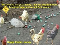 easter egg bunny chickens roosters cocks bad ass road kill funny humor