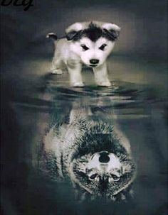 The Effective Pictures We Offer You About animal wallpaper iphone happy A quality picture can tell y Wolf Pictures, Baby Animals Pictures, Animals And Pets, Funny Animals, Strange Animals, Cute Cat Wallpaper, Wolf Wallpaper, Animal Wallpaper, Beautiful Wolves